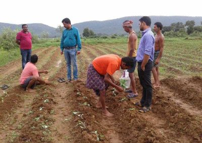 KVK promoting periurban vegetable fmg and off season vegetable cultivation. Rural youth taking early cauliflower cultivation in rice plot