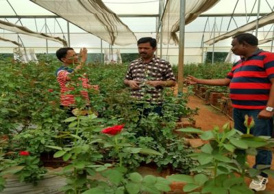 KVK Scientists interacting with commercial rose grower at Village Bhatsingh